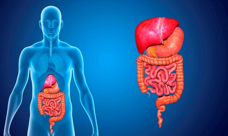 cancer digestivo-IOCir-cirujanos en huelva-cancer gastrointestinal