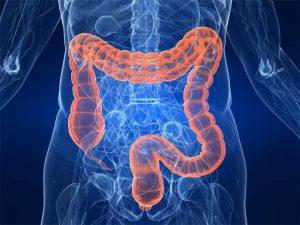 Imagen del intestino grueso