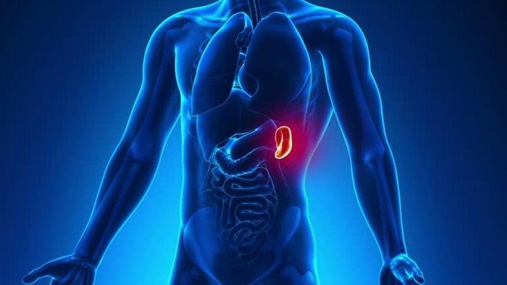 esplenectomia-cirugia del bazo-extirpacion del bazo-cirujanos en Huelva-IOCir